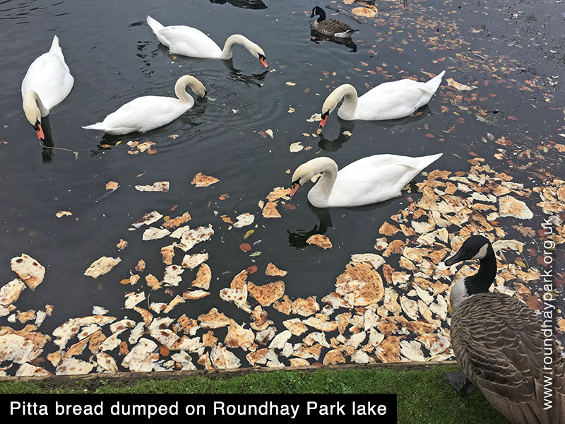 Wholesale dumping of bread in the lake at Roundhay Park