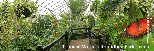 Enter Tropical World